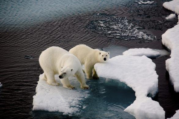 Two polar bears on a small ice floe surrounded by water. Symbolic for climate situation in the arctic. Copy- space.